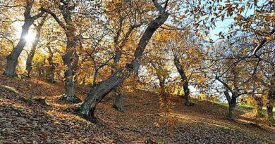 Sabato 30 ottobre: Alla scoperta del Parco Regionale di Roccamonfina – I colori ed i sapori dell'autunno